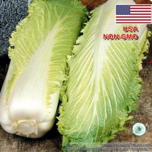 hat giong cai thao michihili  brassica rapa subsp  pekinensis