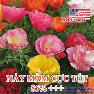 hat giong hoa kim anh poppy   california mix  eschscholzia californica