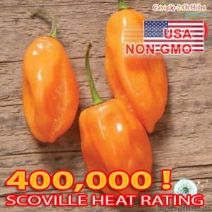 hat giong ot cay   habanero scoville 350k  capsicum annuum
