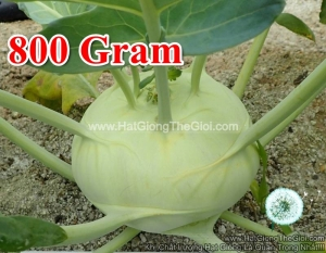 hat giong su hao xanh f1 800gr tg60