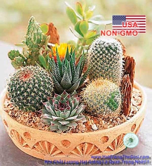 hat giong xuong rong mix  cactaceae